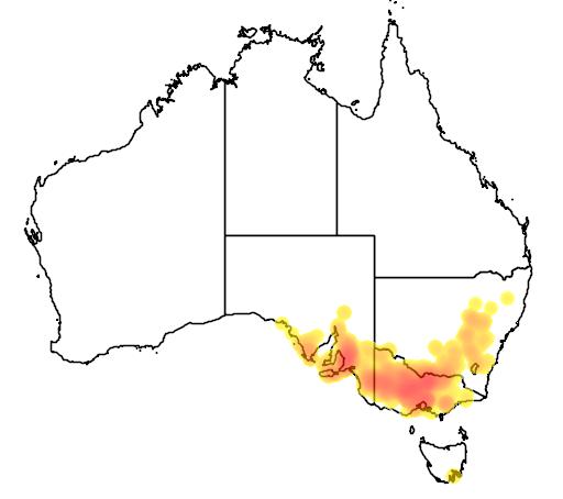 distribution map showing range of Acacia acinacea in Australia