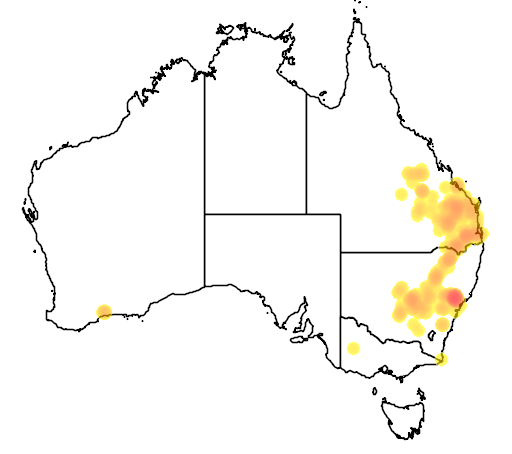distribution map showing range of Acacia amblygona in Australia