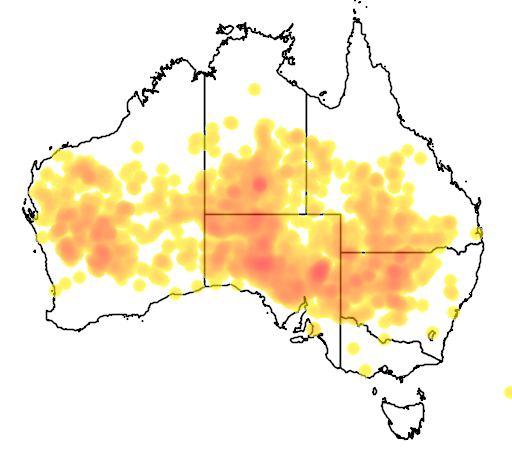 distribution map showing range of Acacia aneura in Australia