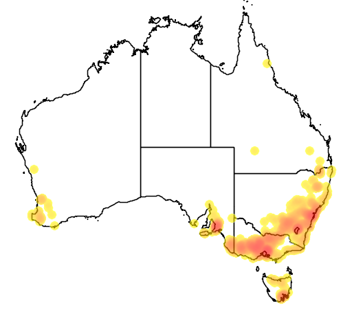 distribution map showing range of Acacia baileyana in Australia