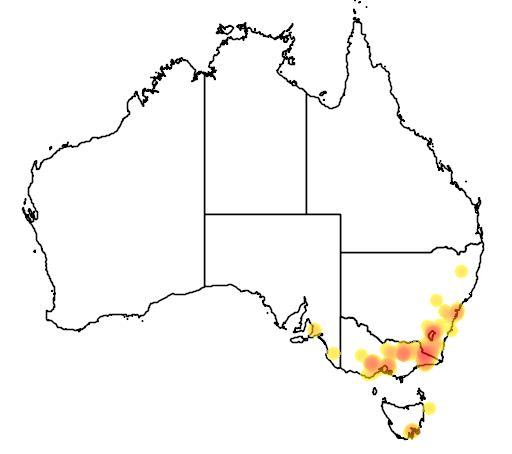 distribution map showing range of Acacia boormanii in Australia