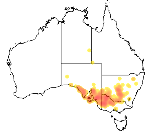 distribution map showing range of Acacia brachybotrya in Australia