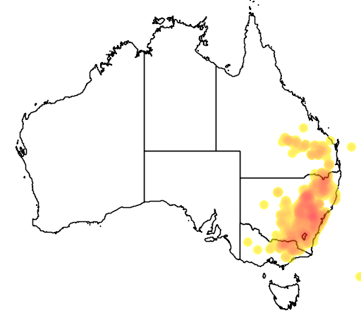 distribution map showing range of Acacia buxifolia in Australia