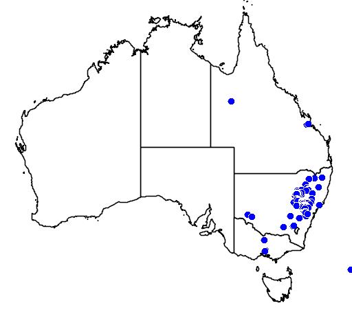 distribution map showing range of Acacia caesiella in Australia