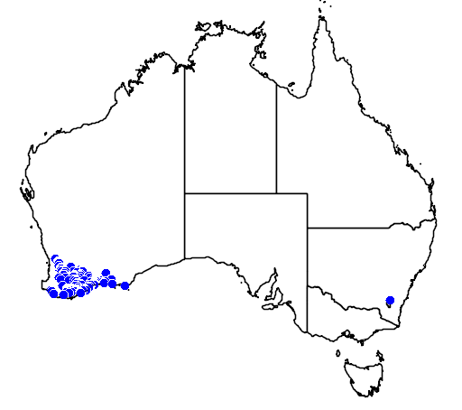 distribution map showing range of Acacia chrysocephala in Australia