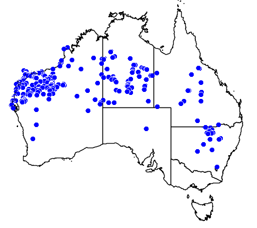 distribution map showing range of Acacia coriacea in Australia