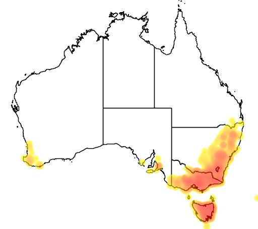 distribution map showing range of Acacia dealbata in Australia