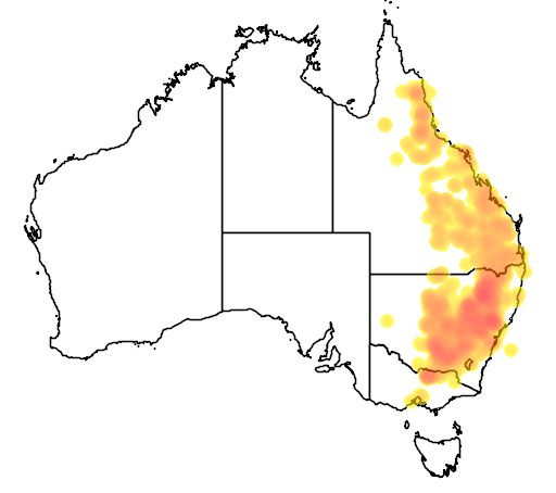 distribution map showing range of Acacia decora in Australia