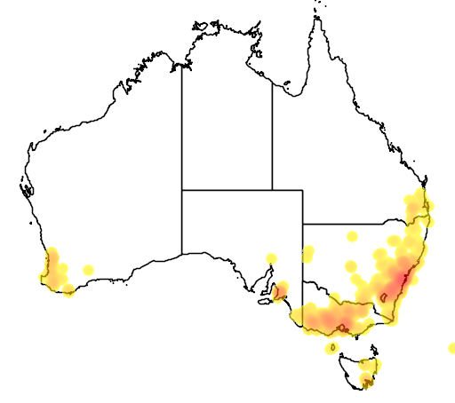 distribution map showing range of Acacia decurrens in Australia