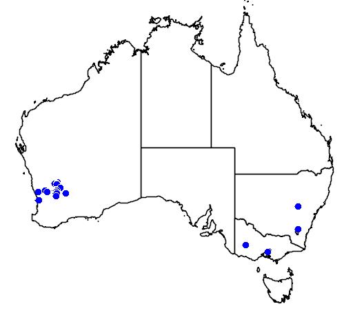 distribution map showing range of Acacia denticulosa in Australia