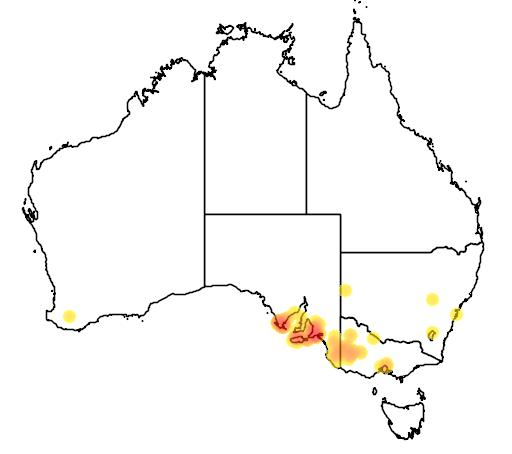 distribution map showing range of Acacia dodonaeifolia in Australia