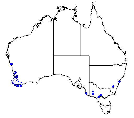 distribution map showing range of Acacia extensa in Australia