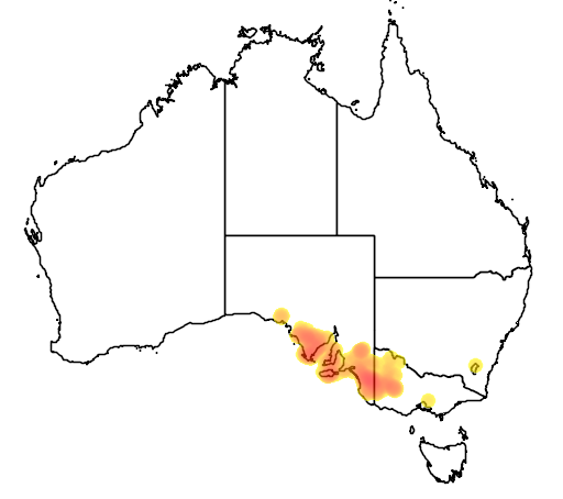 distribution map showing range of Acacia farinosa in Australia