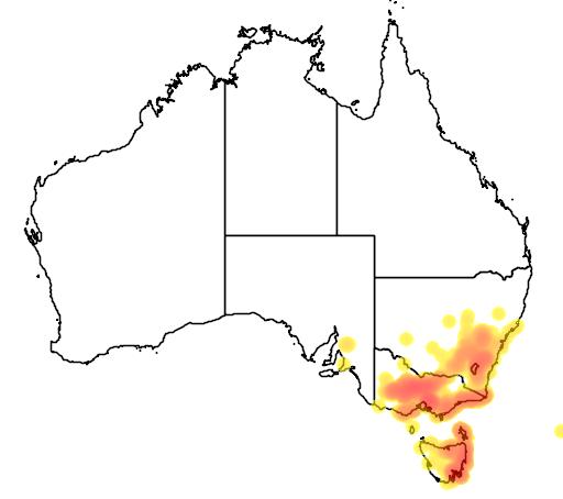 distribution map showing range of Acacia genistifolia in Australia