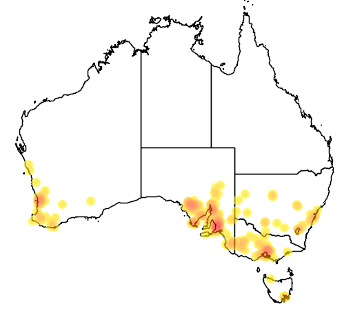 distribution map showing range of Acacia iteaphylla in Australia