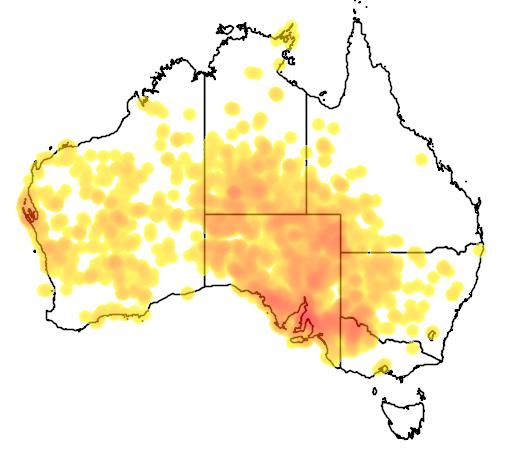 distribution map showing range of Acacia ligulata in Australia