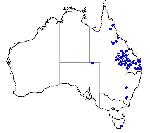 distribution map showing range of Acacia macradenia in Australia