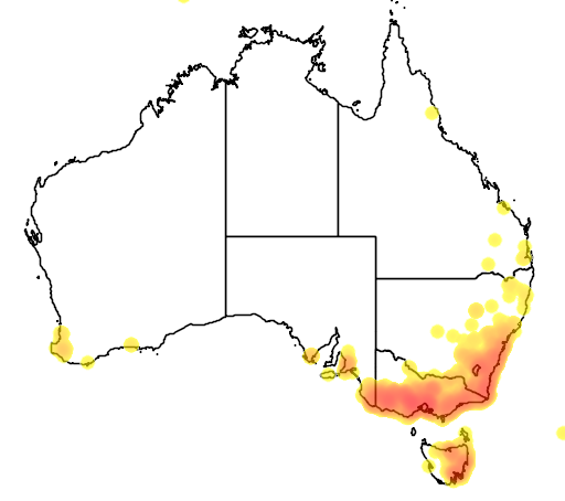 distribution map showing range of Acacia mearnsii in Australia