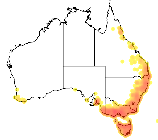 distribution map showing range of Acacia melanoxylon in Australia