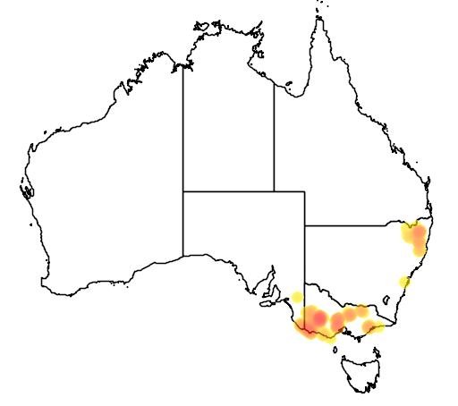 distribution map showing range of Acacia mitchellii in Australia