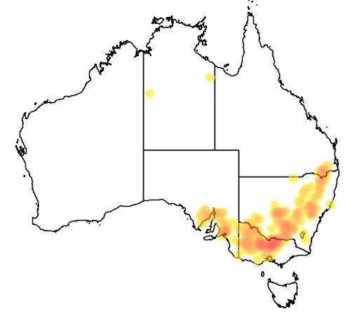 distribution map showing range of Acacia montana in Australia