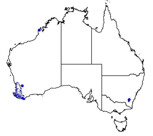 distribution map showing range of Acacia nervosa in Australia