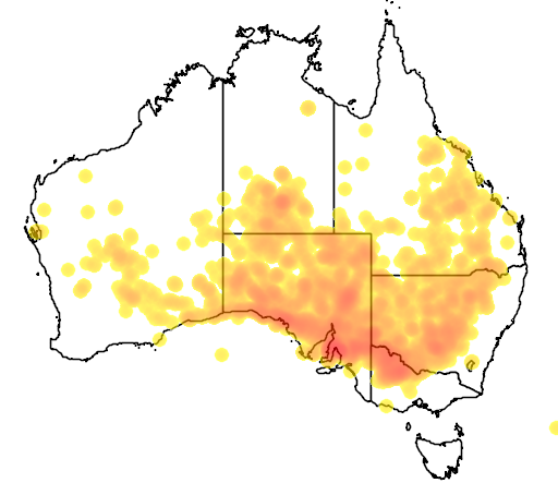 distribution map showing range of Acacia oswaldii in Australia