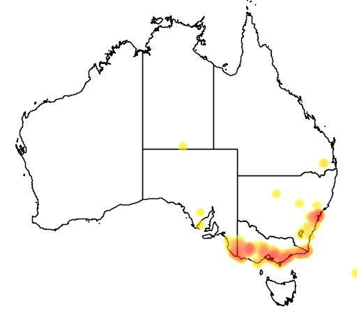 distribution map showing range of Acacia oxycedrus in Australia