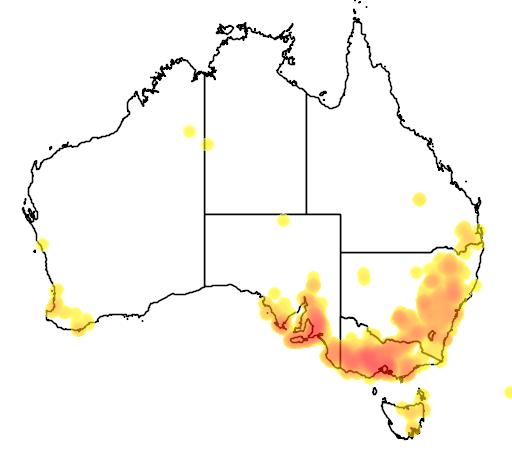 distribution map showing range of Acacia paradoxa in Australia