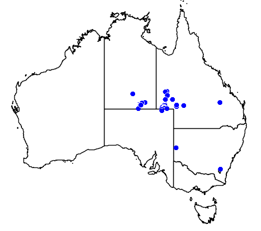 distribution map showing range of Acacia peuce in Australia