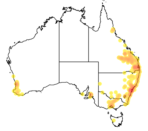 distribution map showing range of Acacia podalyriifolia in Australia