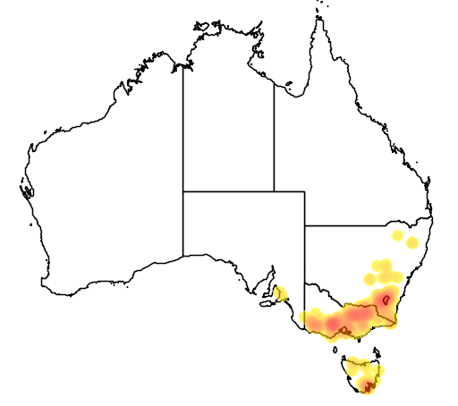 distribution map showing range of Acacia pravissima in Australia