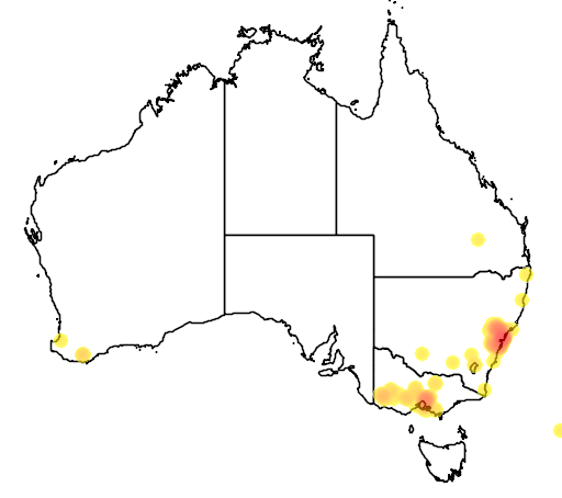 distribution map showing range of Acacia prominens in Australia