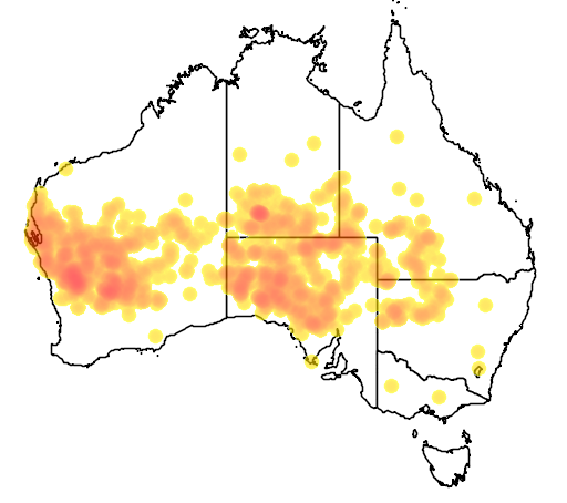 distribution map showing range of Acacia ramulosa in Australia