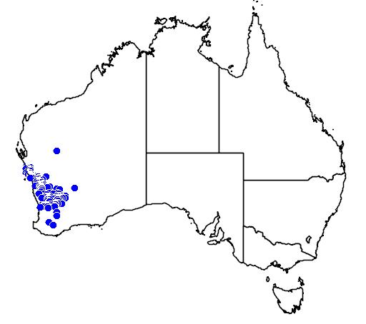 distribution map showing range of Acacia restiacea in Australia
