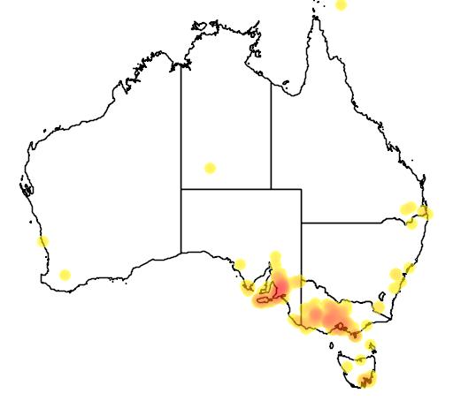distribution map showing range of Acacia retinodes in Australia
