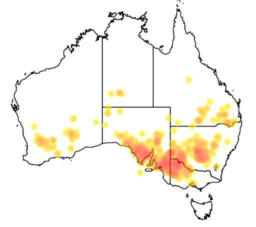 distribution map showing range of Acacia rigens in Australia