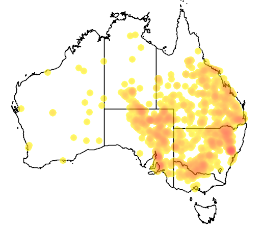 distribution map showing range of Acacia salicina in Australia