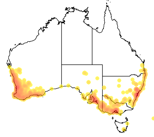 distribution map showing range of Acacia saligna in Australia