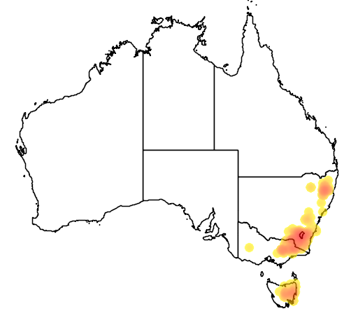 distribution map showing range of Acacia siculiformis in Australia