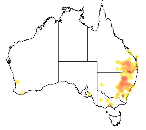 distribution map showing range of Acacia spectabilis in Australia