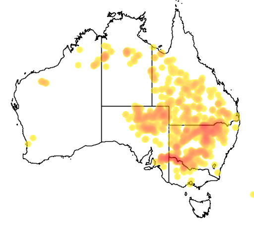 distribution map showing range of Acacia stenophylla in Australia