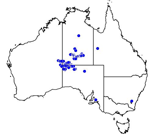distribution map showing range of Acacia strongylophylla in Australia