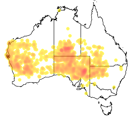 distribution map showing range of Acacia tetragonophylla in Australia