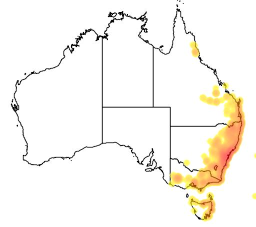 distribution map showing range of Acacia ulicifolia in Australia