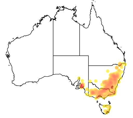 distribution map showing range of Acacia verniciflua in Australia