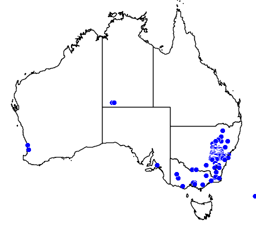 distribution map showing range of Acacia vestita in Australia