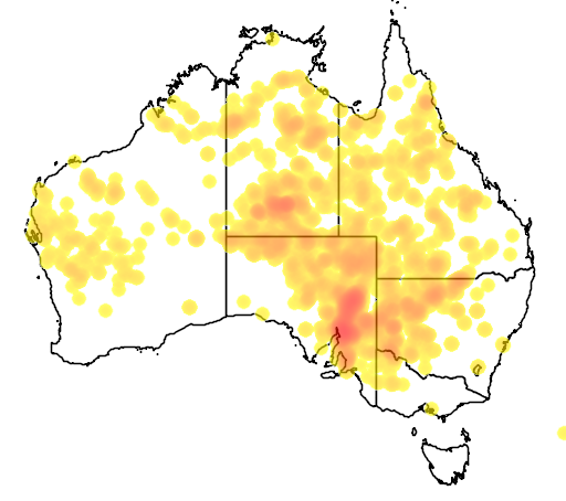 distribution map showing range of Acacia victoriae in Australia