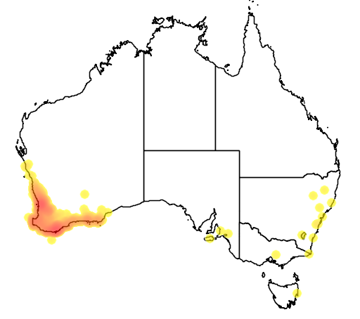 distribution map showing range of Acanthorhynchus superciliosus in Australia