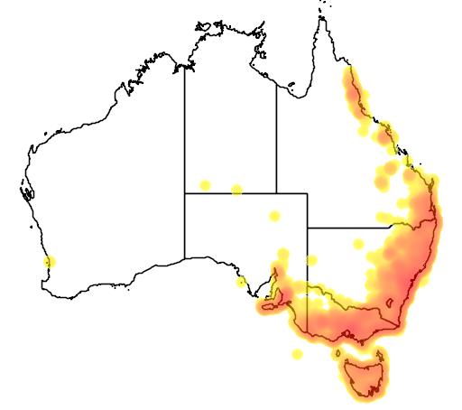 distribution map showing range of Acanthorhynchus tenuirostris in Australia